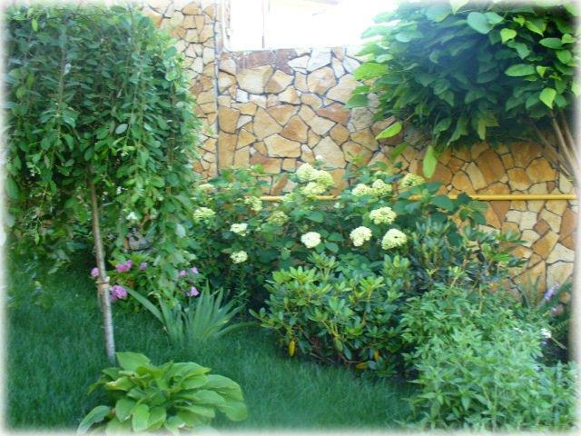 Листопадный микс великолепен летом.Цветущая гортензия,кусты рододендронов,лилия Хоста на фоне пла