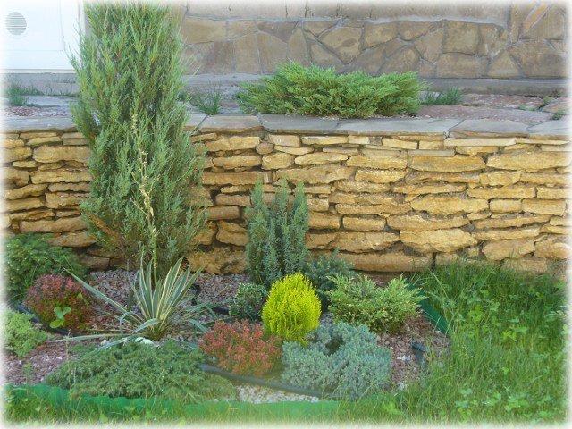 У подпорной стенки доминантным растением миксбордера является можжевельник Блю Стар, его размеры
