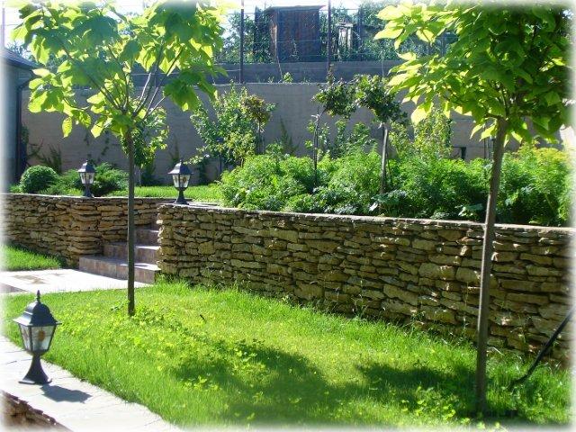 Солнечная палитра сада дополнена золотистой катальпой и травянистыми видами многолетников