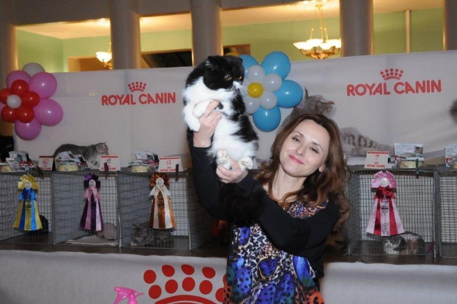 Победитель в котенок экзота из Северодонецка