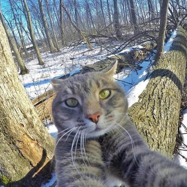 dlyakota.ru_kotofotosessiya_kot-nauchilsya-delat-krutye-selfi-35-foto_3
