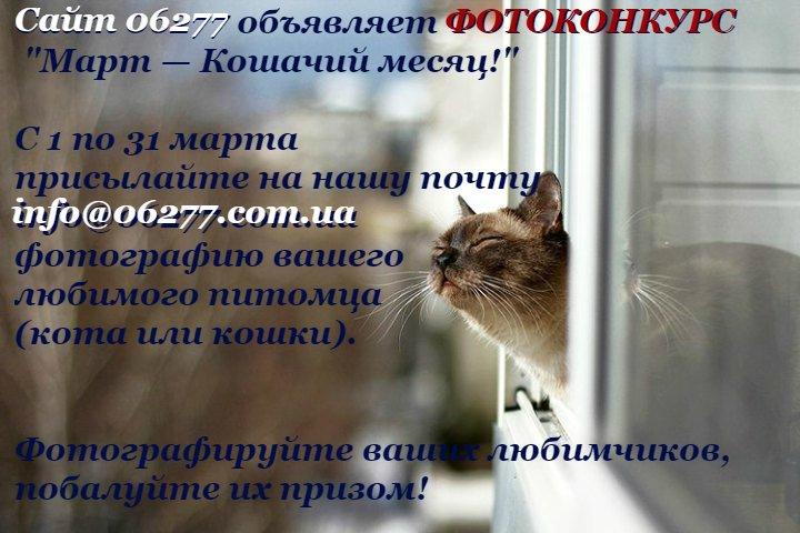 koty-vesnoj